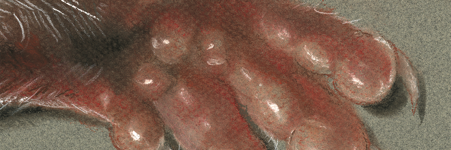 Artistic rendition of an inflamed footpad. Artwork by Phillip Sisti
